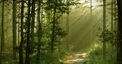 Tutela e valorizzazione dei boschi: al via la nuova disciplina